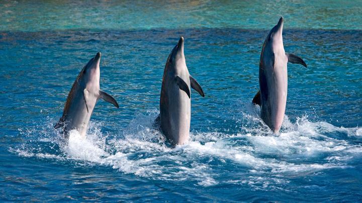 Encuentra el mejor lugar para ver delfines en Tin Can Bay