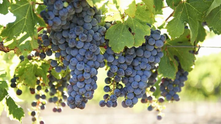 Encuentra el mejor lugar para el vino en Margaret River