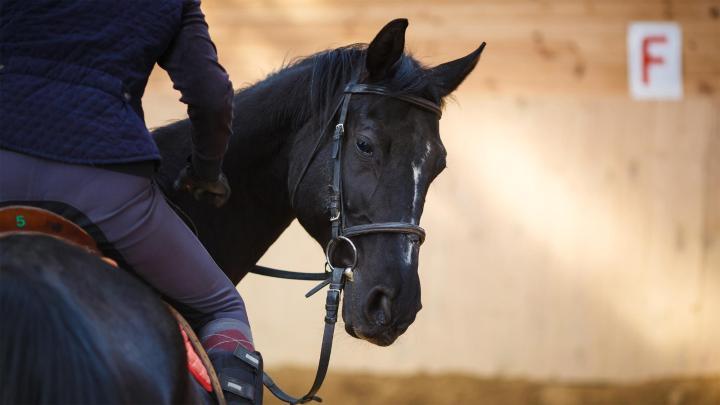 Encuentra el mejor lugar para las carreras de caballos en Doncaster