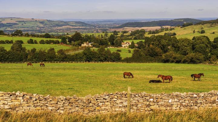 Encuentra el mejor lugar para las carreras de caballos en Cheltenham