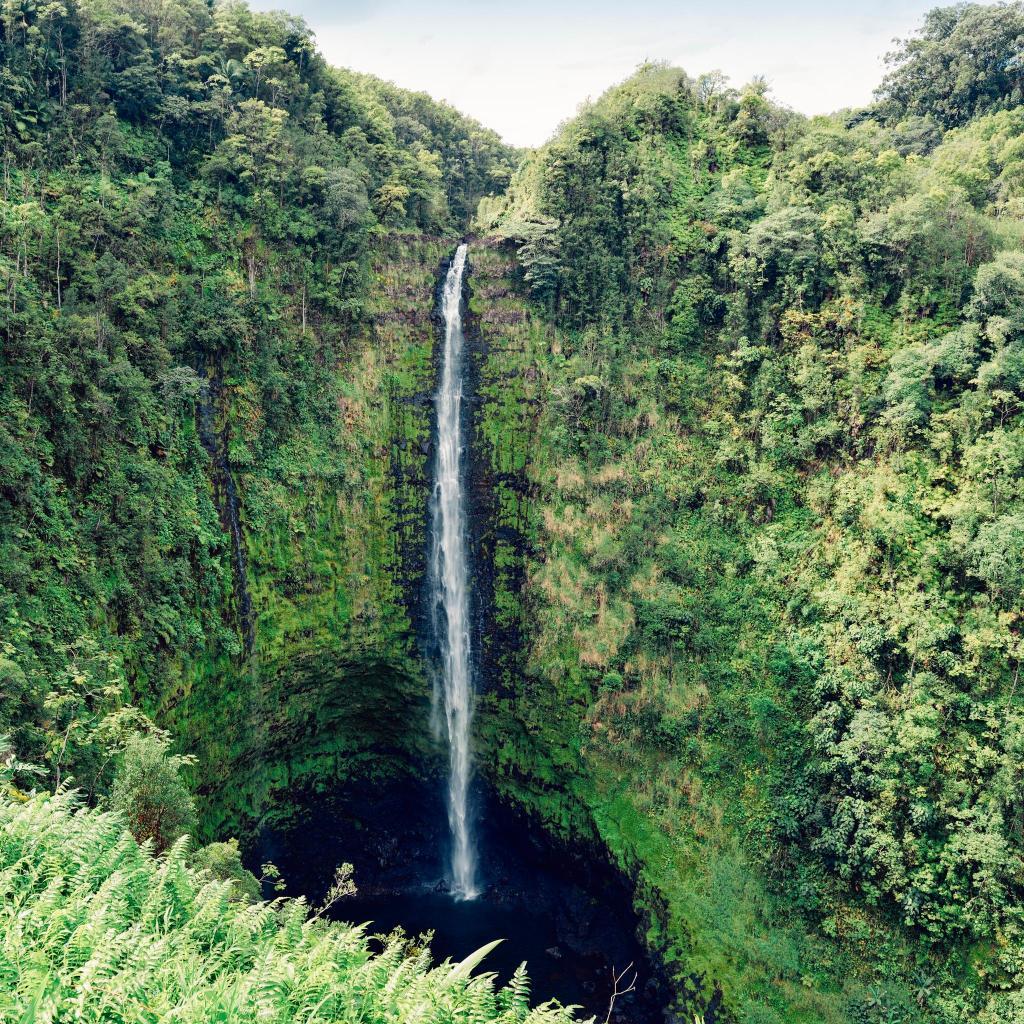 A proposal in Hawaii is irresistibly cheesy