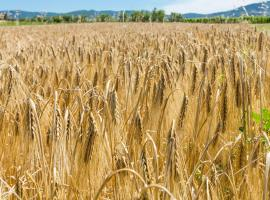 Agriturismo Case Nuove, Castellina Marittima