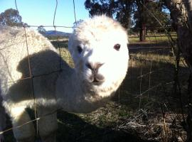 Starline Alpacas Farmstay Resort, Broke