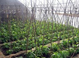 Beijing Old Zhang Garden Farmstay Xiandai Gongshe, Yanqing