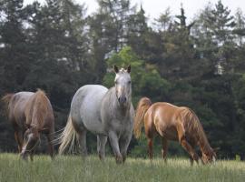 Ranch 79, Smědčice