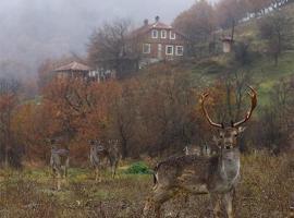 Villa Fauna, Rakitna