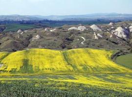 Il Canto del Sole, Monteroni d'Arbia