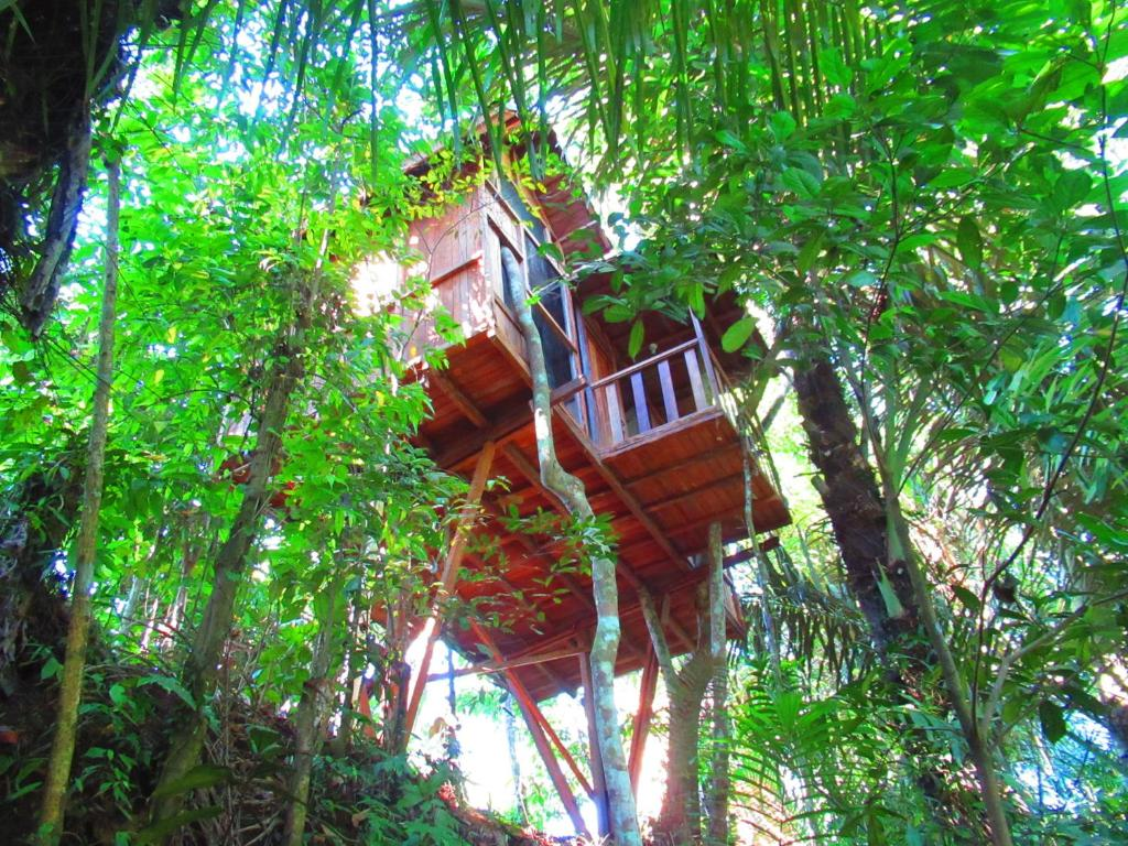 tree house pictures. Galeri Akomodasi Ini Tree House Pictures
