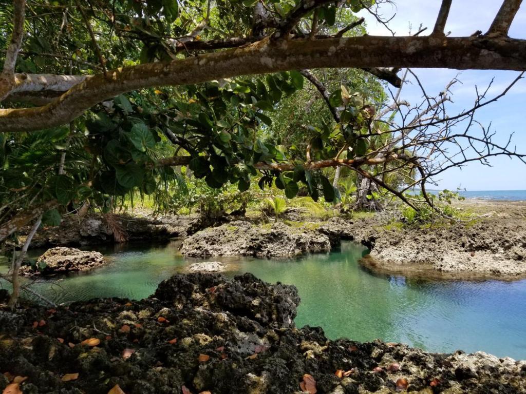 Piscina Natural on the Sea, Cahuita – Precios actualizados 2018