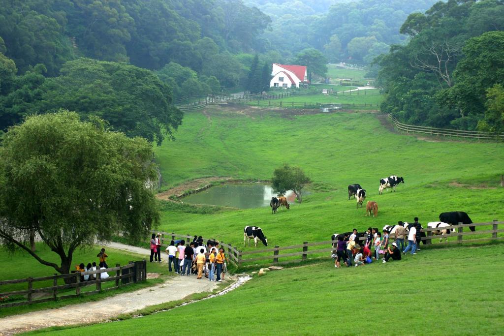 Inn Flying Cow Ranch Tongxiao Taiwan Bookingcom