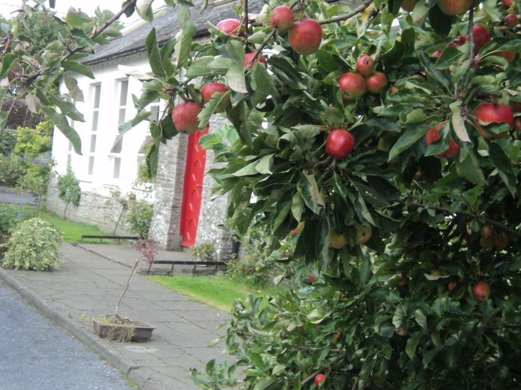 A garden outside The School House Castledermot