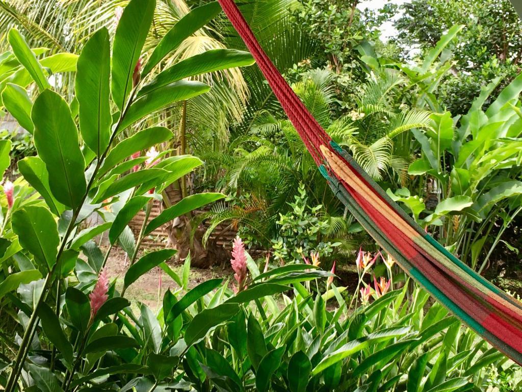 Un Bungalow Dans Mon Jardin Fleuri Baie Mahault Guadeloupe