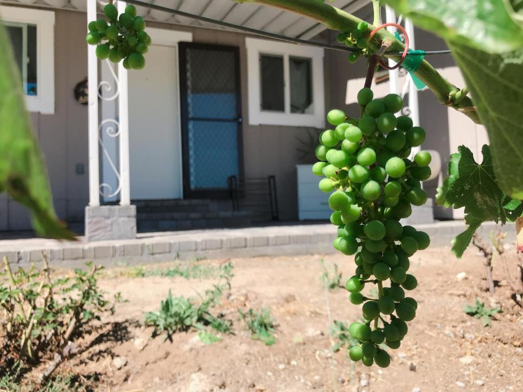 vineyard s found estate wine country vacation home santa rosa ca