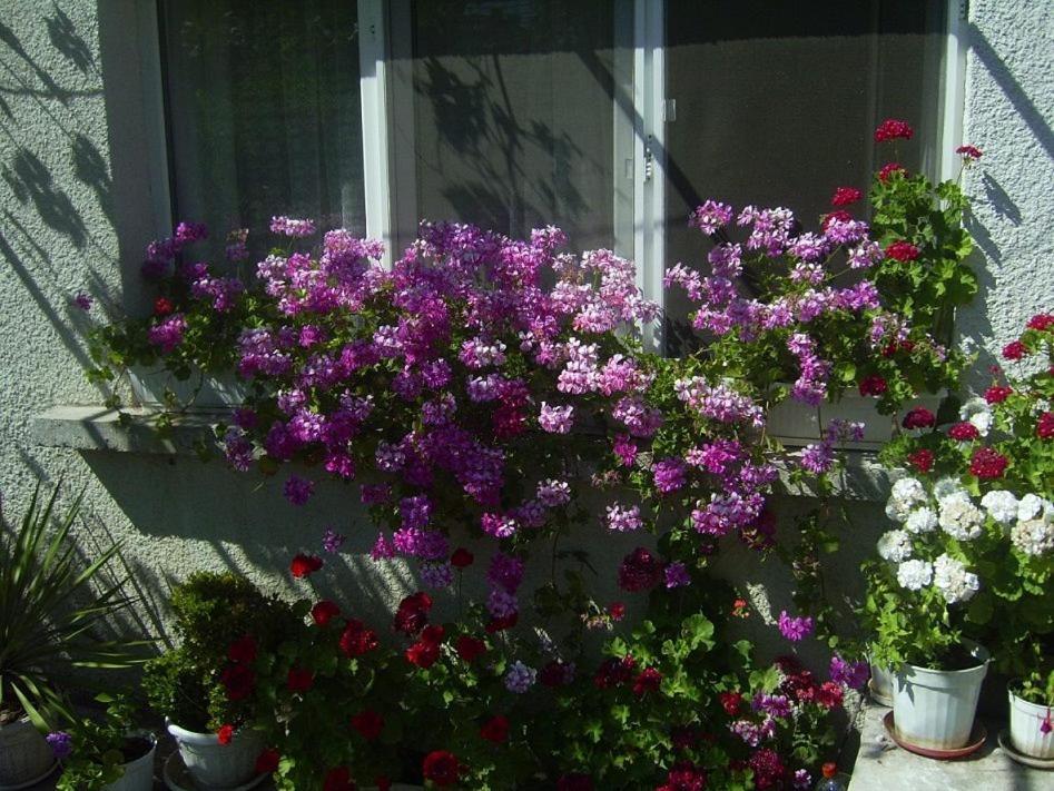 Къща за гости Hrisi - Черноморец