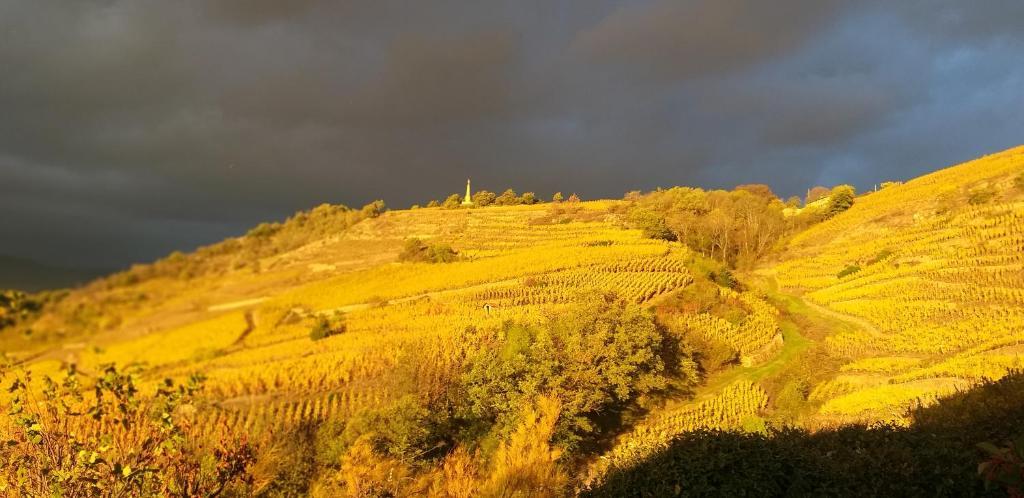 Wine Passion Panoramic