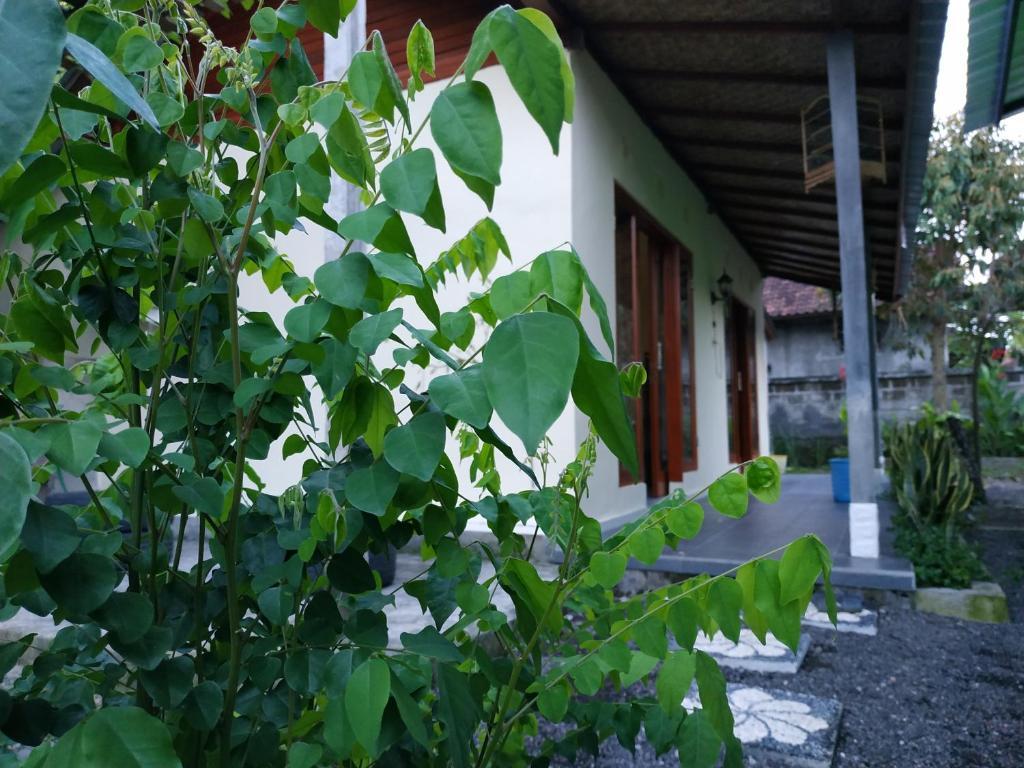 Bale Teba Bali, Mambal – Precios actualizados 2019