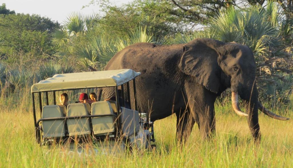 Image result for elephant park
