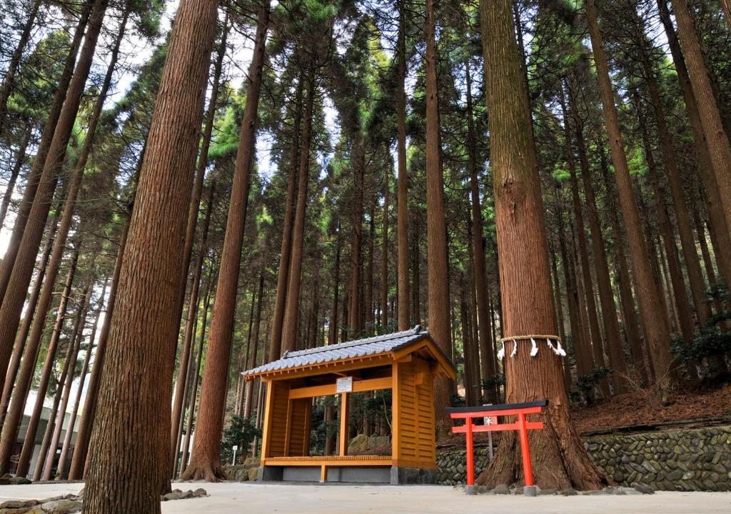 ポイント2.風情溢れる百年杉庭園