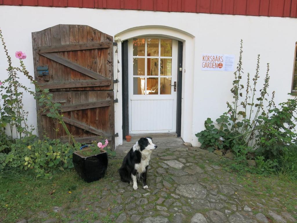 Husdjur som bor med gäster på Körsbärsgården Rum & Frukost