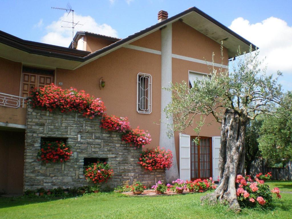 Piccolo Giardino Con Ulivo  Nel giardino degli ulivi castelnuovo magra u  prezzi aggiornati