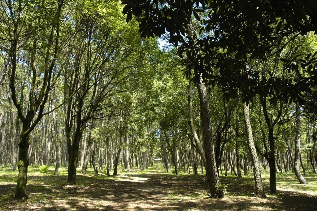 ポイント3.ランニングもサイクリングも!散策が楽しい広大な黒松林