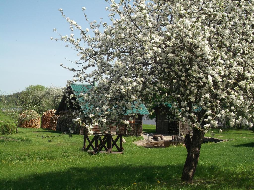 A garden outside Viesu māja Arkādija