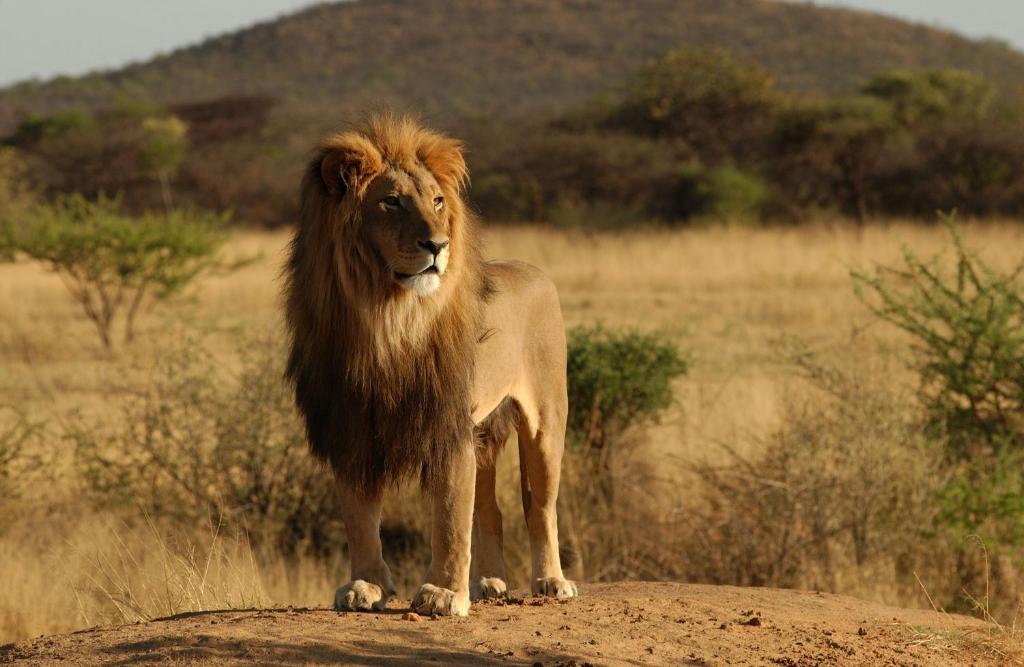 Africa Safari Camp Selous Nyakisiku Updated 2019 Prices