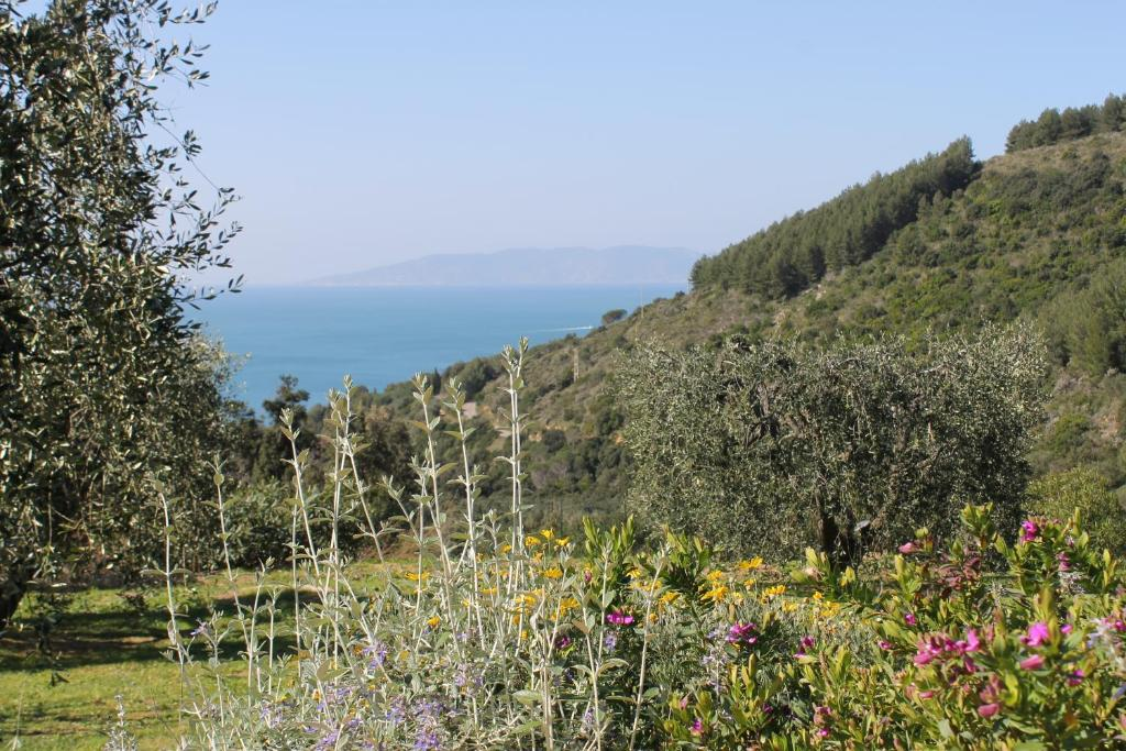 Rent agricultural land in Monte Argentario