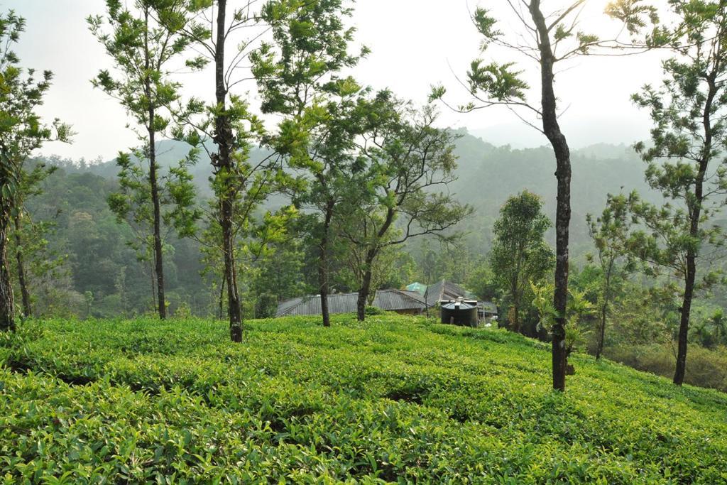 Tea garden holiday home vythiri india for Terrace kitchen priyanka