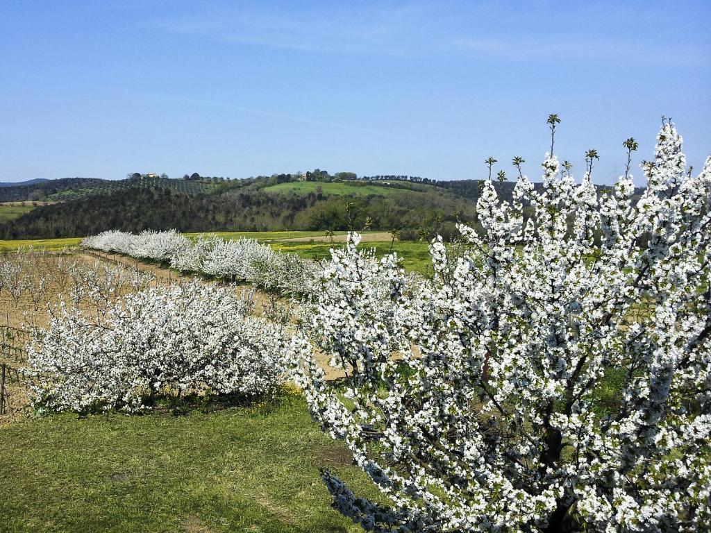 Bauernhof il giardino dei ciliegi italien cura nuova booking.com