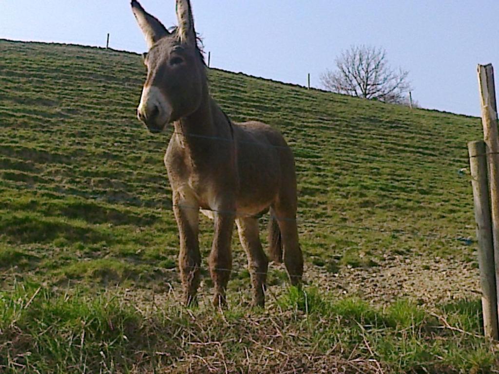Farm Stay La Cerreta, Rocca San Casciano, Italy - Booking.com