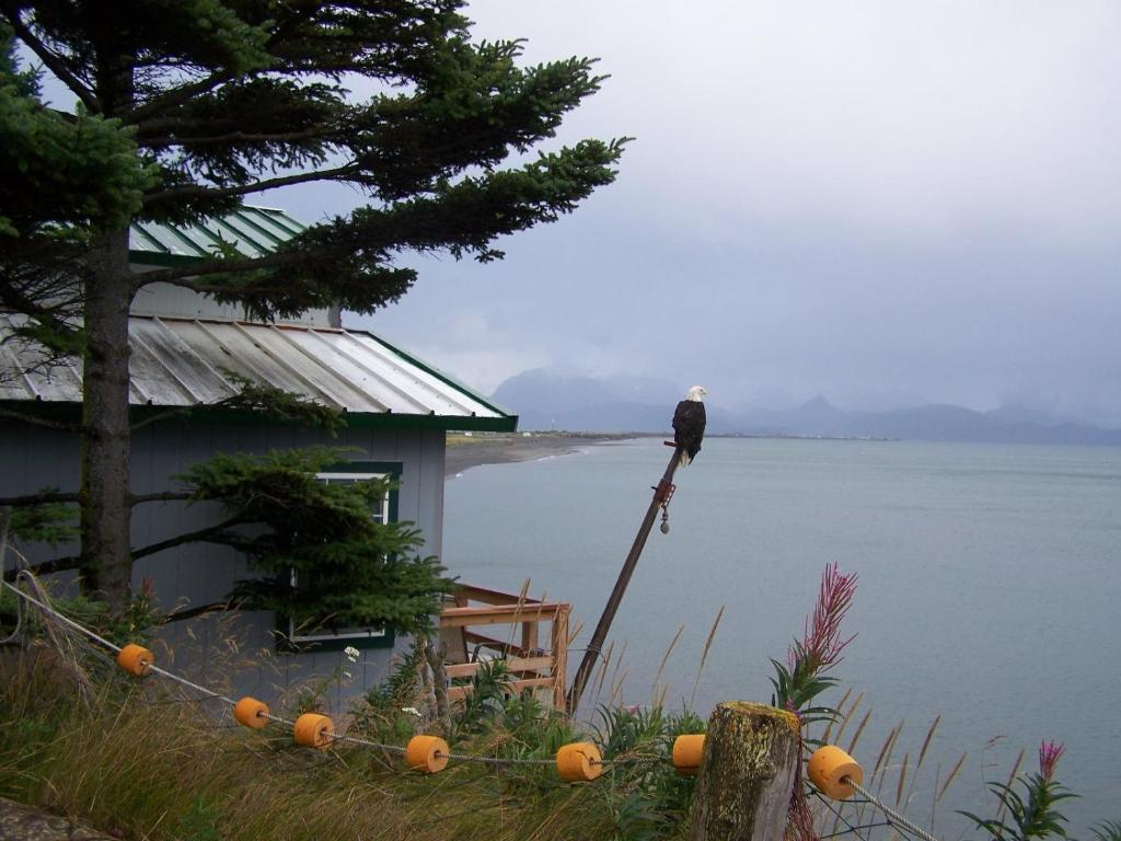 Alaska Beach House B Homer Ak Booking
