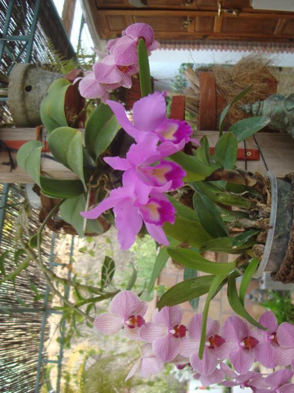 Bonita foto de Villa La Huerta