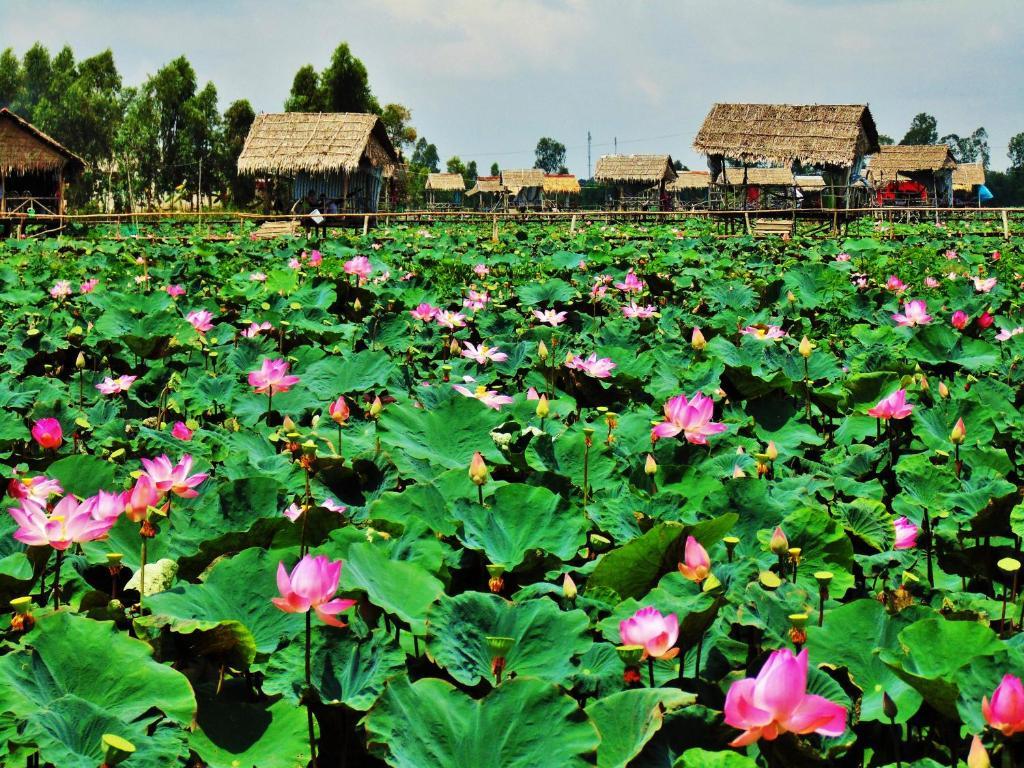 Hai Lua Homestay Lotus Lake Homestay P Thp Mi Vietnam