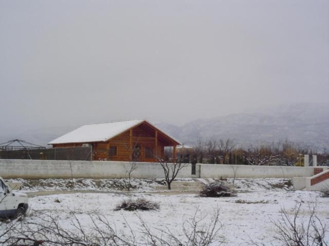 La Merendera en invierno