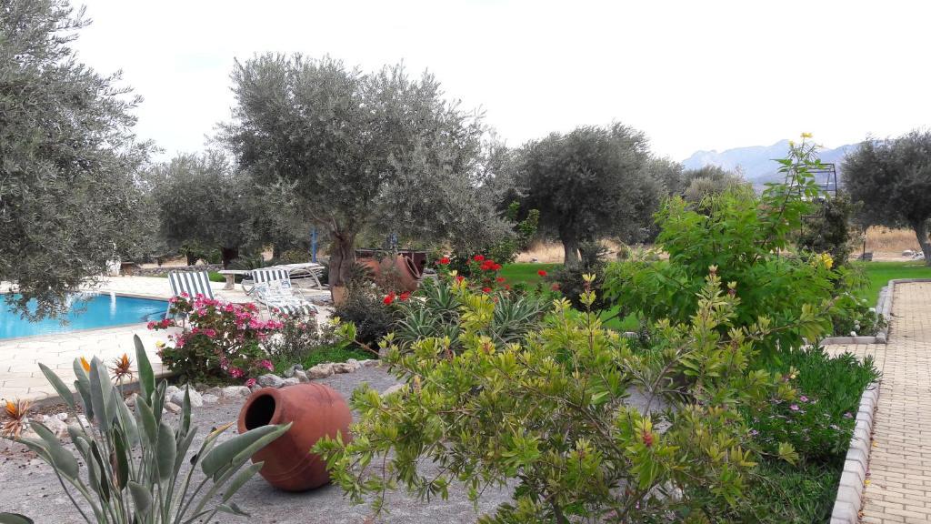 Olive Garden, Lapithos – aktualne ceny na rok 2018