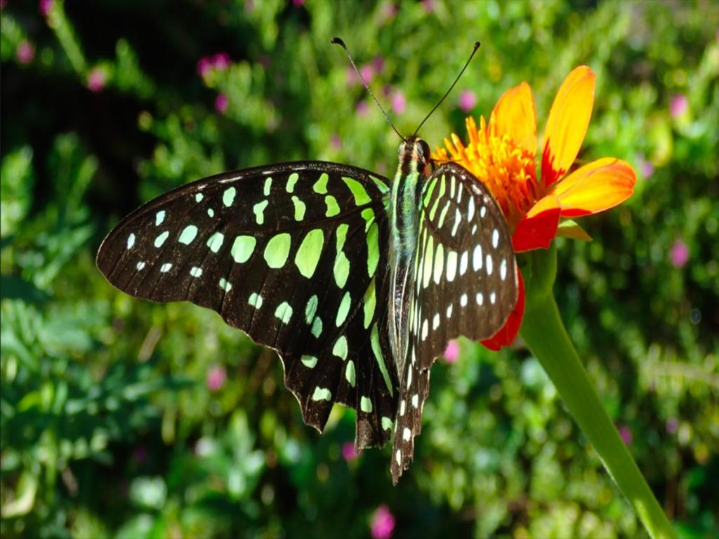 Dream Butterfly Garden Boutique Villa Siem Reap Updated 2018 Prices Tiket Park Insect Kingdom Gallery Image Of This Property