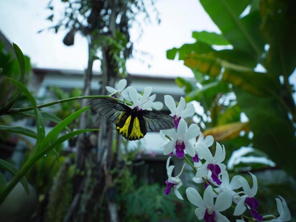hotel dream butterfly garden boutique vil siem reap cambodia
