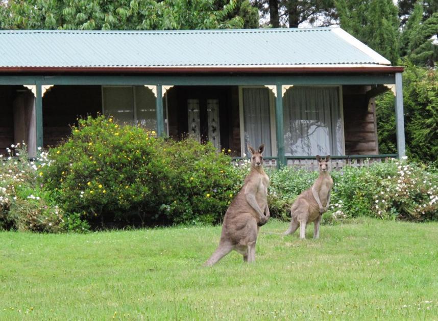 Backyard Cabins Victoria cedar lodge cabins, mount victoria, australia - booking