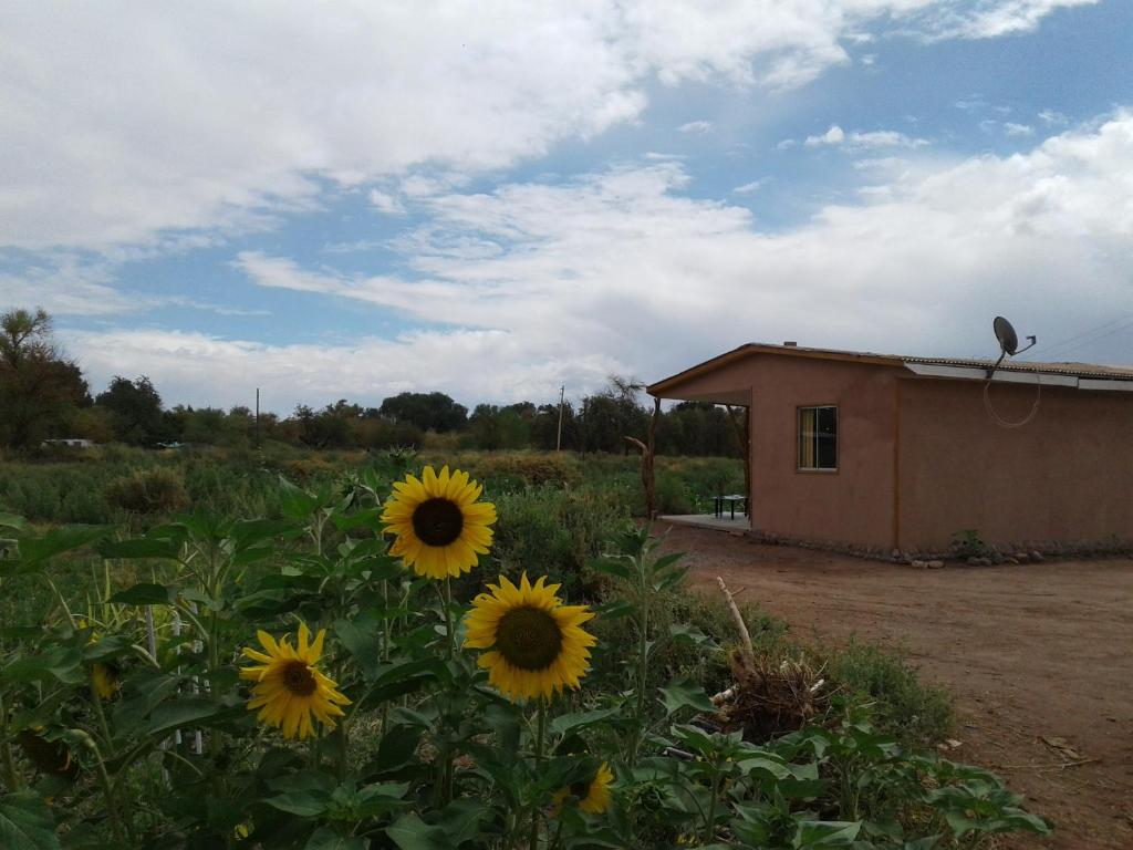Casa de Campo San Pedro, San Pedro de Atacama – Updated 2019 ...