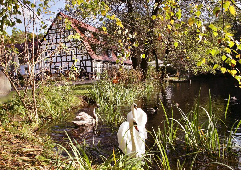 Hotel Springbach Mühle Belzig Deutschland Bad Belzig Bookingcom