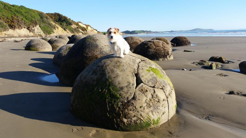 Moeraki Boulders Motel Hampden Updated 2019 Prices