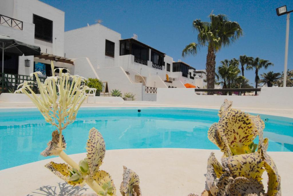Apartment Lanzarote Ocean View. Los Lajares, Puerto Del Carmen, Spain    Booking.com