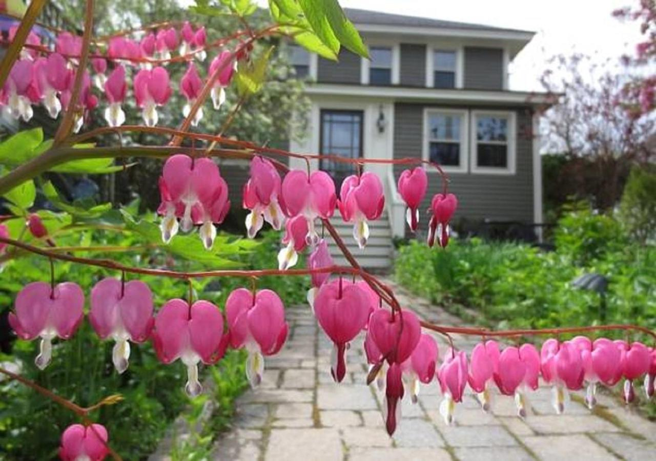 Bed And Breakfasts In Cape Neddick Maine