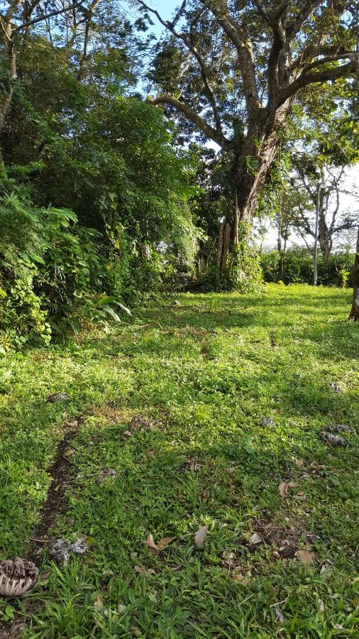 Bed And Breakfasts In Nuevo Arenal Guanacaste