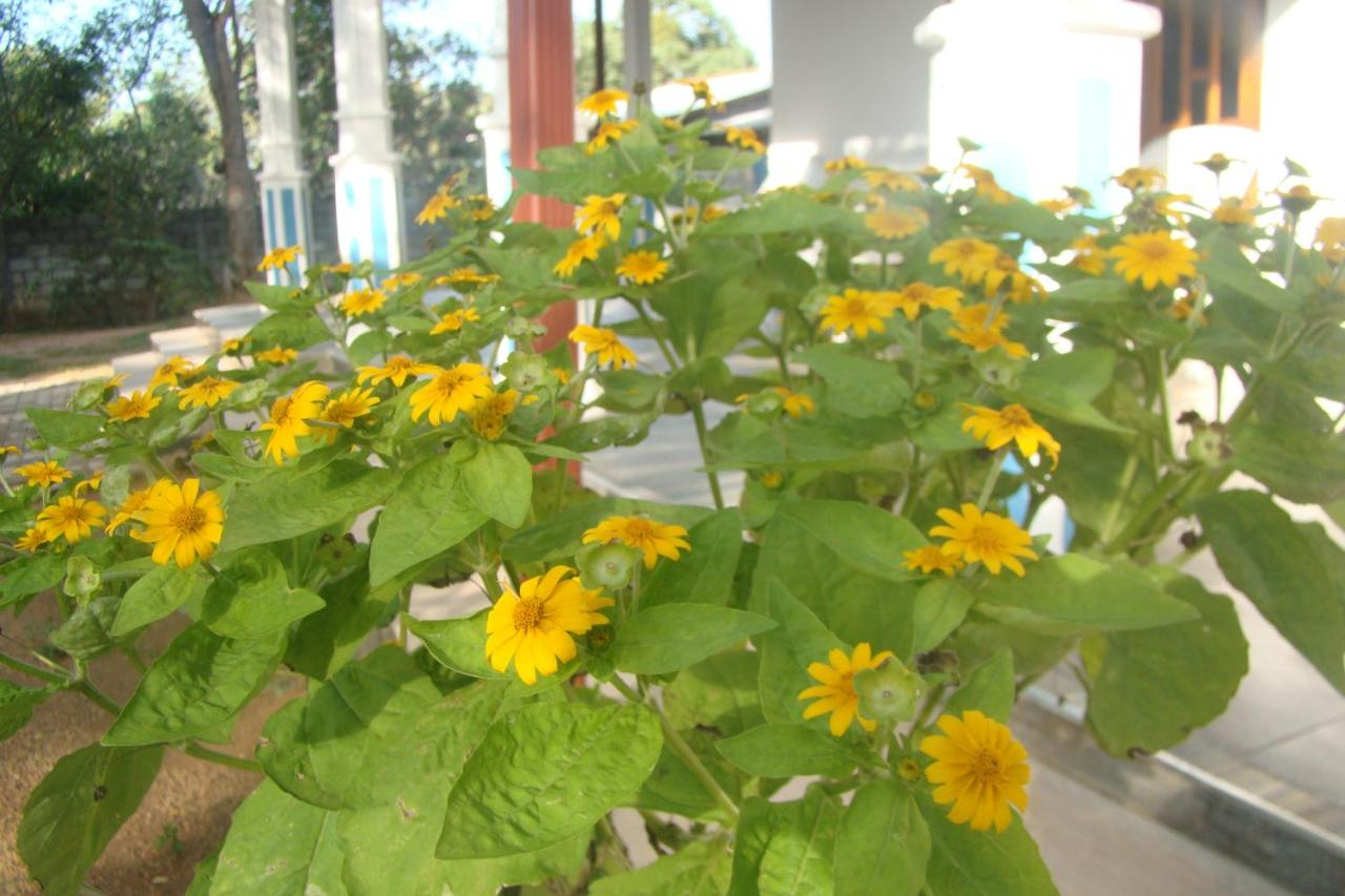 sunflowers massage asiatisk massage