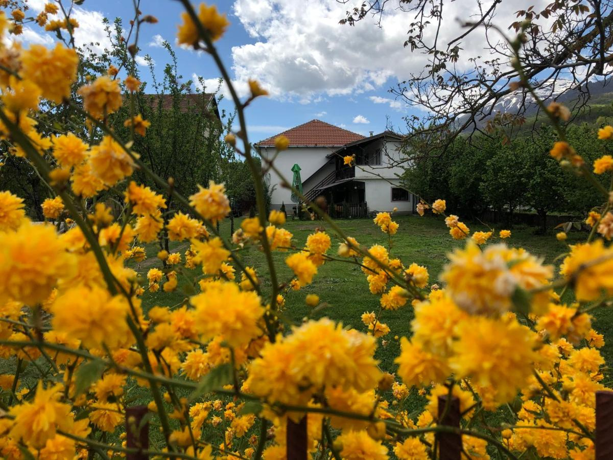 Image result for vratnica spring