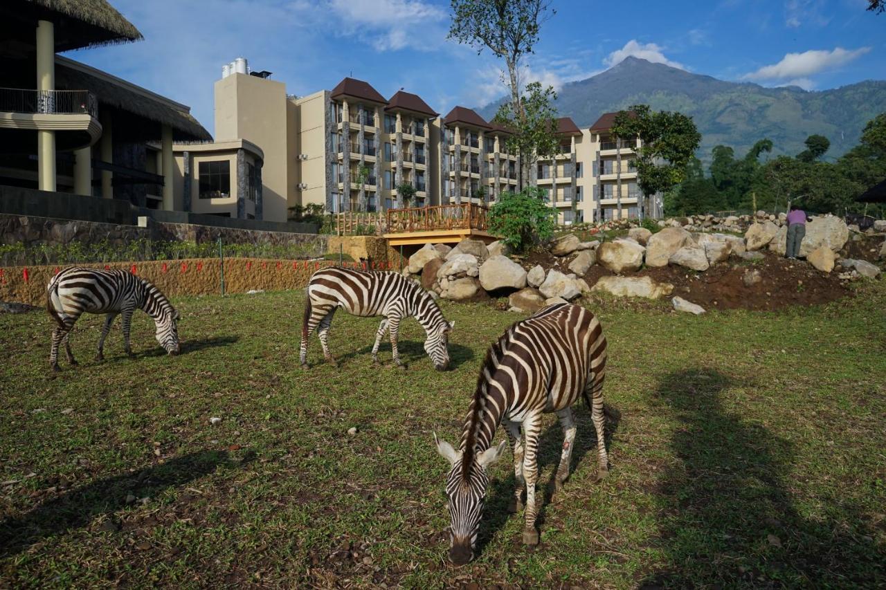 Baobab Safari Resort Prigen Booking Com