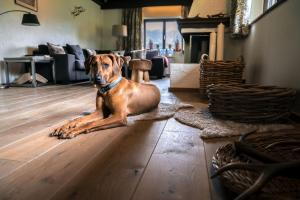 Pet or pets staying with guests at Steinberghaus Ferienhaus