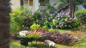 A garden outside Apartments Helena